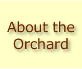 About the Orchard
